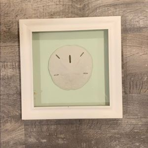 Wall hanging sand dollar